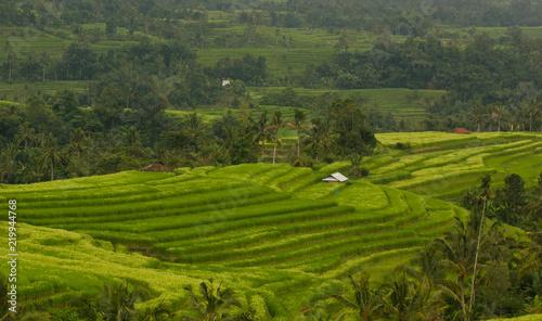 Deurstickers Groene Jatiluwih rice terraces in Bali, Indonesia