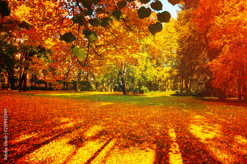 Fall trees in sunny autumn park lit by sunshine - sunny fall landscape in soft sunlight