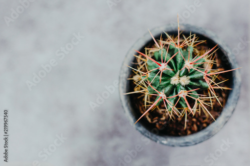 Foto op Canvas Cactus Potted cactus house plant on grey background. Detailed image with grey background
