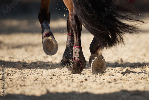 Fototapeta The horse runs on the sandy road the detail of the hooves obraz