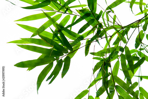 In de dag Bamboo Beautiful green bamboo leaves isolated on white background in summer season. It use for artworks, postcard, wallpaper.
