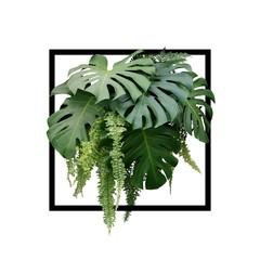 Panel Szklany 3D Tropical foliage plant bush of Monstera and hanging fern green leaves floral arrangment nature backdrop with black frame on white background.