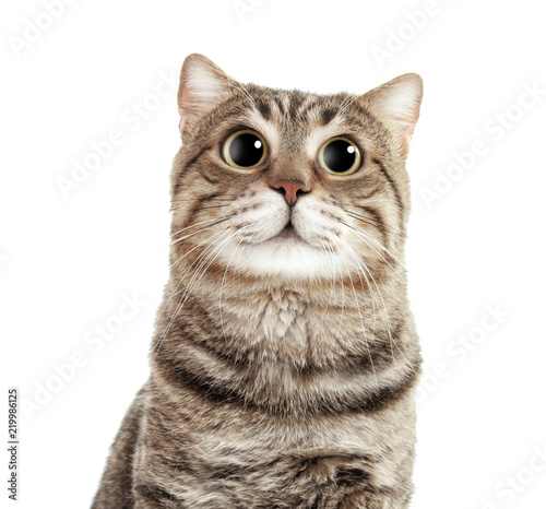 Cute Cat On White Background Lovely Pet Buy This Stock