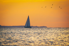 Sailboat And Seagulls In The Sandy Hook Bay At Sunset