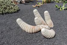 White Cactus Of Cactus Garden,...
