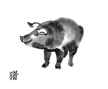"Pig Sumi-e Illustration. Swine Oriental Ink Wash Painting With Chinese Hieroglyph ""pig"". Symbol Of The Eastern New Year."