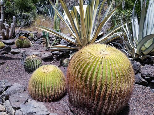 Foto op Canvas Cactus The cactua garden