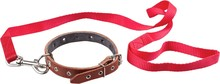 Dog Collar And Leash - Isolated