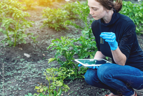 Fototapeta Agronomist woman holding a soil sample and a tablet. Environmentally friendly farm production without nitrates. obraz