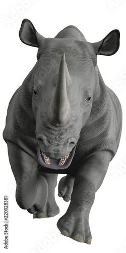 Fototapeta premium nosorożce odkrywają okolice