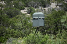 Deer Stand In The Mountains