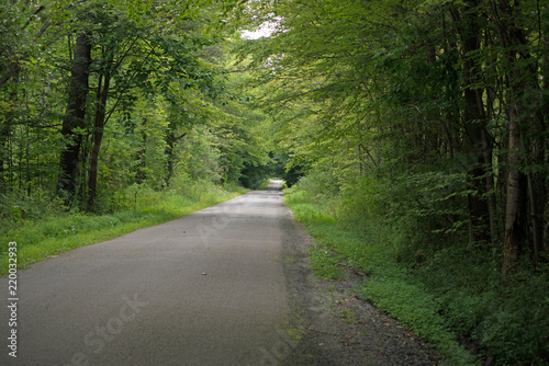 Fotografie, Obraz  Rural road under tree canopy