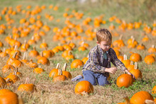 Child Chooses A Pumpkin On The...