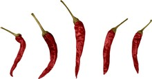 Dried Chili Peppers - Isolated