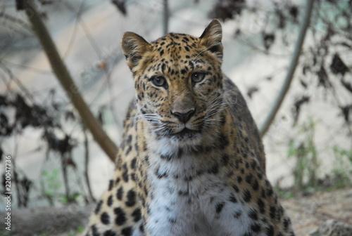 Leopard Stance Portrait