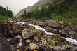 Fast water stream from glacier in wild mountain creek with big wet stones in terrain of Shavlinsky Lakes in Altai. Landscape with forest and snowy mountains on background.