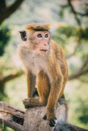 Foto op Plexiglas Aap portrait of monkey in jungle