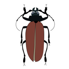 Vector, Isolated, Beetle, Insect