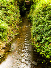 Stream Cut Through Dense Veget...