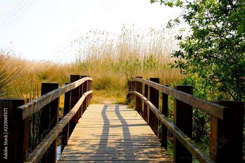 Puente de madera en el parque natural del humedal de la Marjal de Pego Oliva, Al Canvas Print