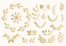 Set Of Golden Fir, Spruce, Pin...