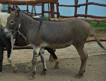 Donkey Standing Next To Pony Outside Stable