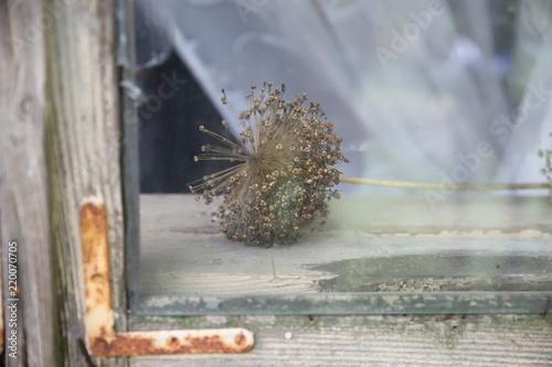 okno, kwiat - 220070705