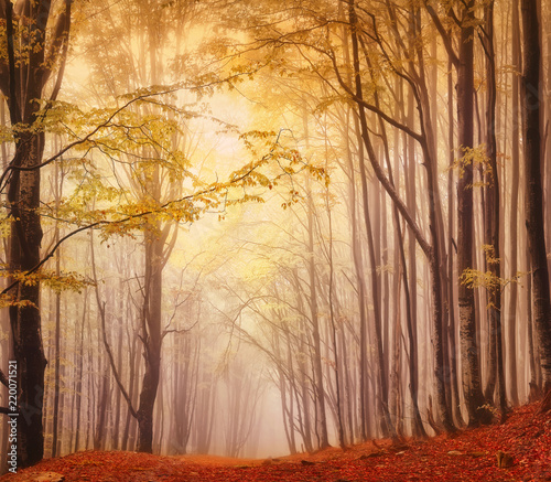 A misty fantastic autumn forest. The beech trees are in a fog.
