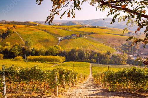 Deurstickers Honing Langhe in Autunno, Piemonte, Italia