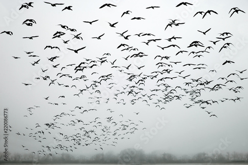 a flock of birds in the fog