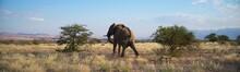 Namibia Wild Desert Elephant From Behind