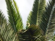 Kramers Parrot