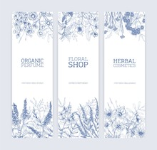 Collection Of Vertical Banners Decorated With Wild Flowers And Flowering Meadow Herbs Hand Drawn With Contour Lines On White Background. Vector Illustration For Floral And Herbal Products Promotion.