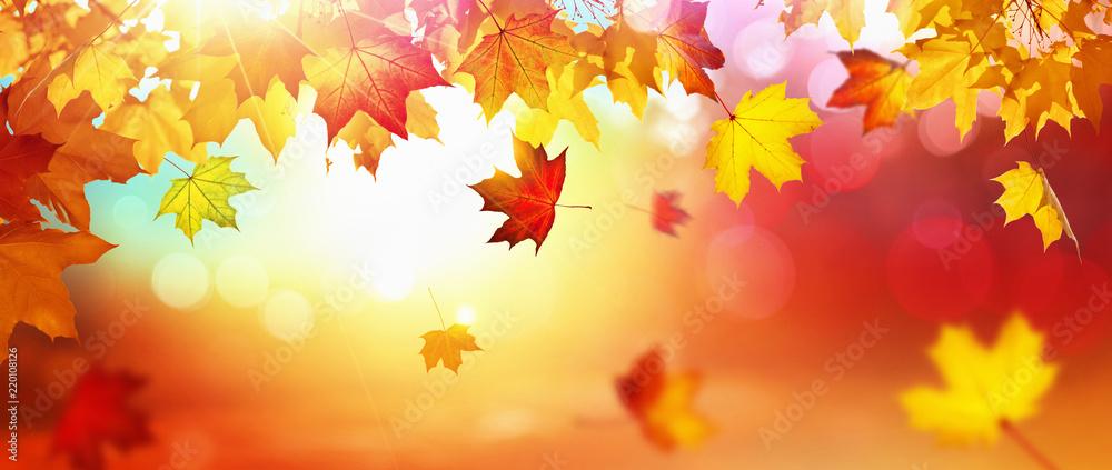 Fototapeta Falling Autumn Maple Leaves Natural Background - obraz na płótnie