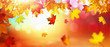 canvas print picture Falling Autumn Maple Leaves Natural Background