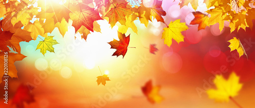 Fototapeta Falling Autumn Maple Leaves Natural Background obraz
