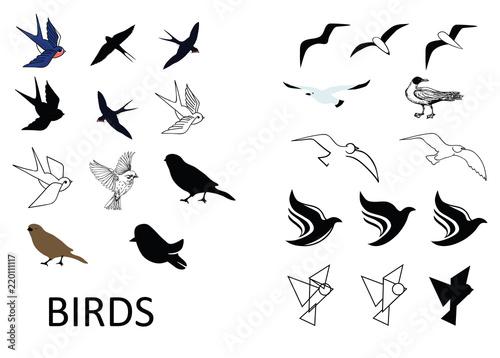 Set of vector birds Wallpaper Mural