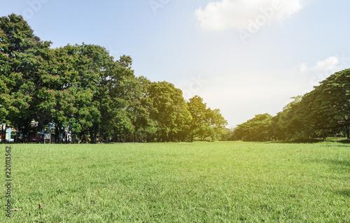 Fotografia, Obraz  Green park