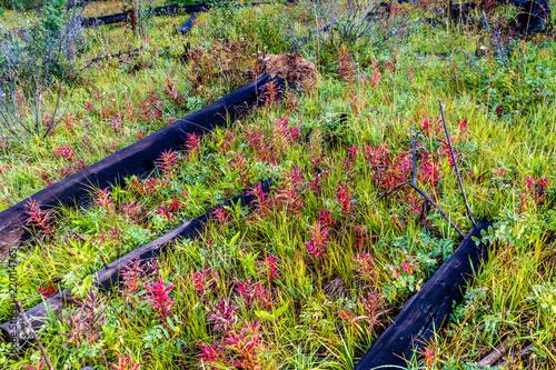 Fotografia  Prescribed burn area, Banff National Park, alberta, Canada