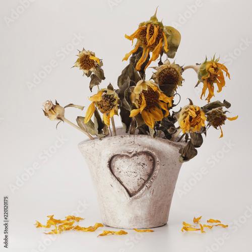 Photo  Herzvase mit verblühten Sonnenblumen