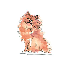 Watercolor Illustration Of Pom...