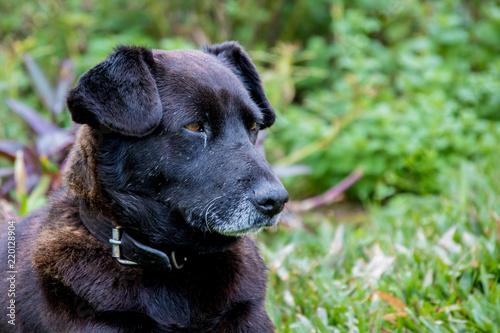 Foto  cachorro preto com olhos castanhos na grama verde