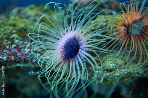 Photo Sea anemones in abstract colors