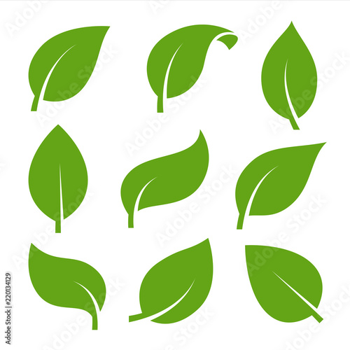 Fototapeta Eco green color leaf vector logo flat icon set. Isolated leaves shapes on white background. Bio plant and tree floral forest concept design. obraz na płótnie