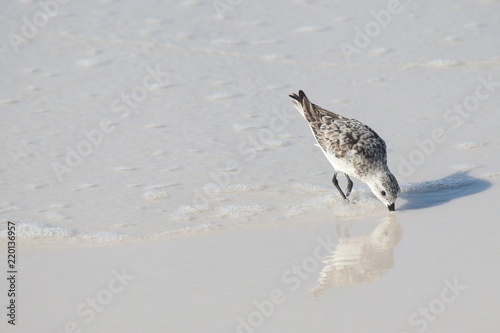 Sandpiper Posters & Wall Art Prints | Buy Online at EuroPosters