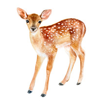 Spotted Fawn On White Background. Deer. Watercolor. Illustration. Template. Handmade. Image. Picture