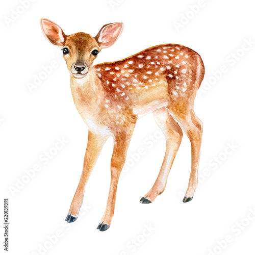 Spotted fawn on white backg...