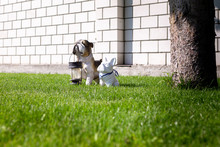 The Figure Of A Dog On The Lawn