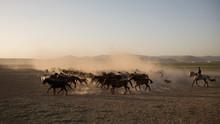 Wild Horse Herds Running In Th...