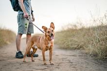 Man And Dog Hiking